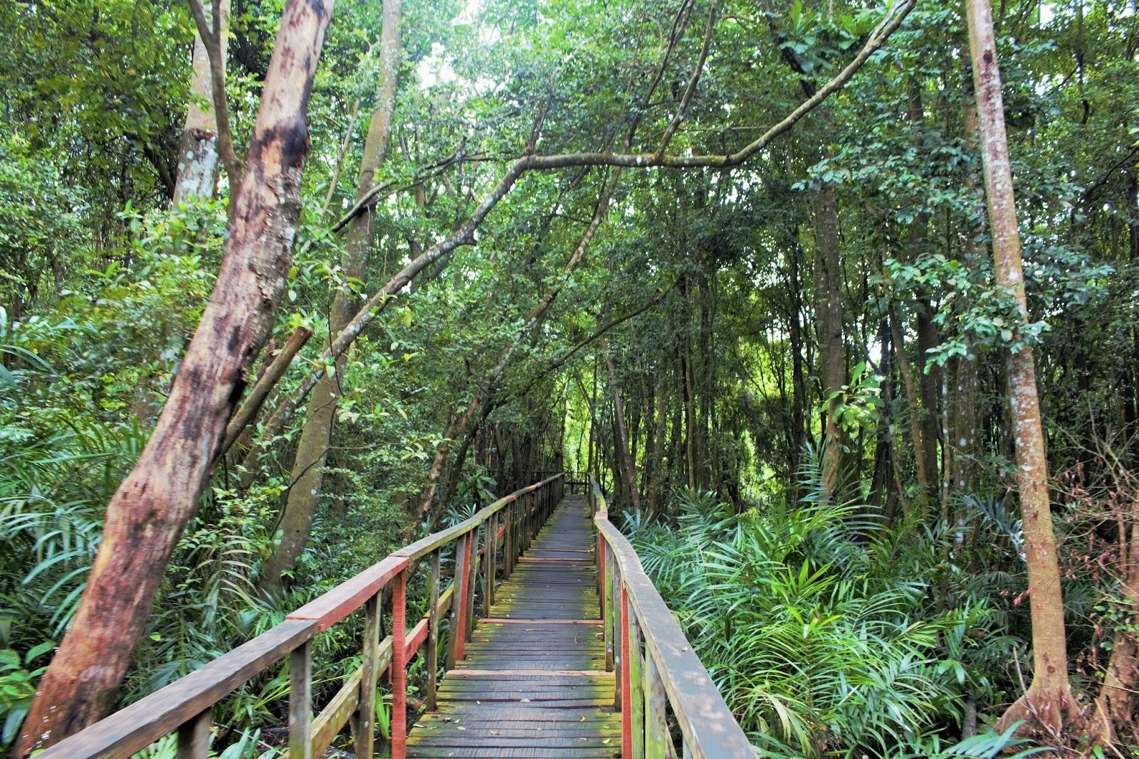 Dense vegetation and boardwalk at lekki conservation centre