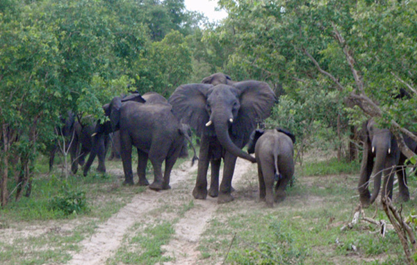 Yankari-Elephant.hotels.ng