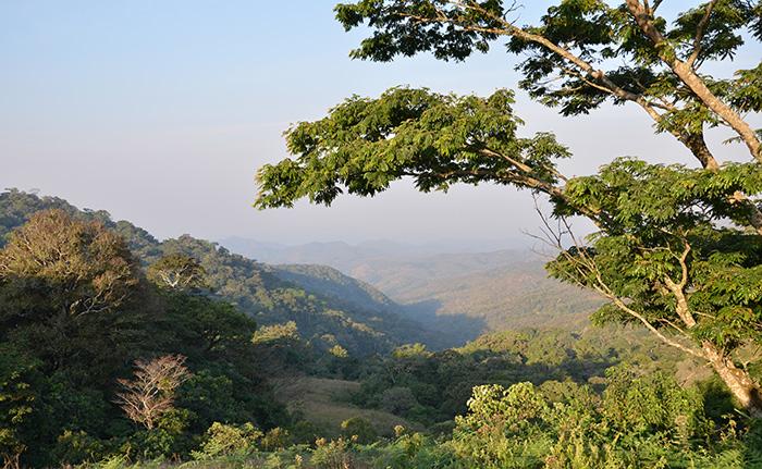 Ngel-Nyaki-Forest-jalingo--hotels.ng