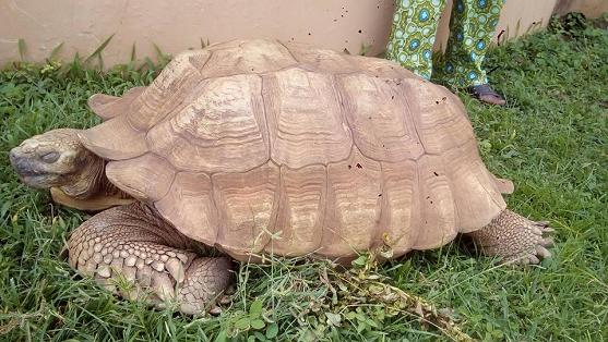 ogbomoso tortoise-hotels.ng