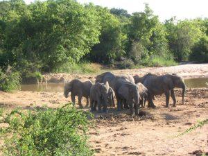 Yankari-elephant-hotels.ng