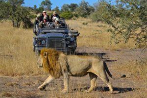 Lion-yankari-hotels.ng