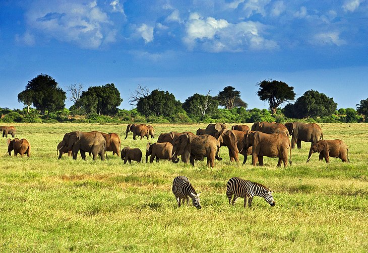 Wildlife in Kenya: Cheapest Countries Nigerians can visit for tourism
